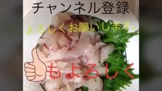 チャンネル登録よろしくお願いします(^ ^) タコ釣りたのしい。