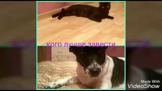 Кого лучше завести кошку или собаку?!