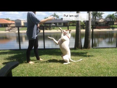 Deaf Dog Tricks