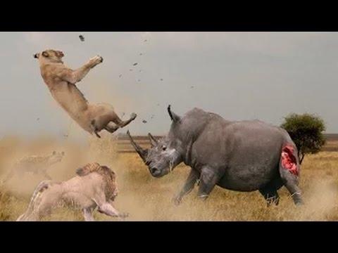 Hayvanların Feci Dövüşü