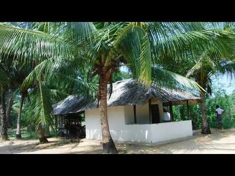 Tour of plantation near Puttalam, Sri Lanka