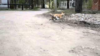 кошки против собак  приколы с животными