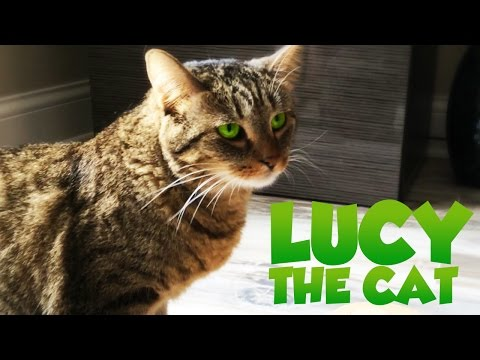 Lucy The Cat Uses 100% Of Her Brain (Lucy Movie Parody)