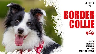 BORDER COLLIE |  தமிழ்  |  Most Intelligent Dog Breed  |  PETFLIX Tamil  |  Guinness Record