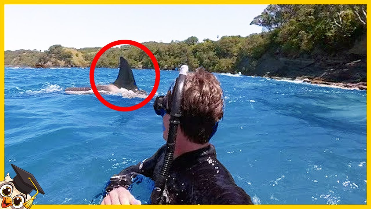 Download 10 Momentos de Miedo al Pescar Captados por una Cámara