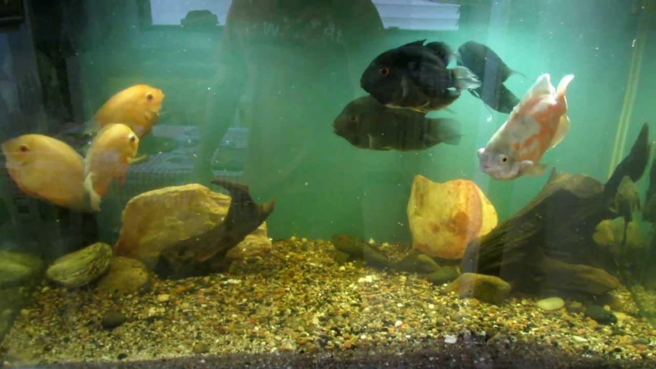 Acuario de peces amaz nicos youtube for Peces para acuario