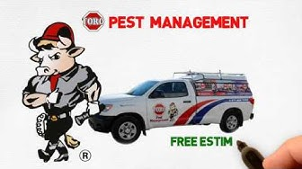 Ant Control Services in South Miami, FL ( Ghost - Carpenter - Red Fire - Pharoah - Pavement Ants )
