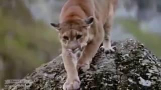 भालु ने शेर को मार दिया भयानक