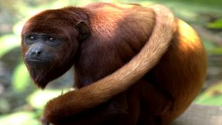 An Unquantifiable Liability: A Response To Simian of Fecal Matter Flung