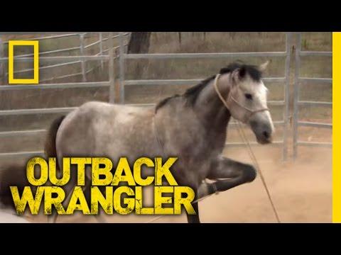 Breaking Wild Horses | Outback Wrangler