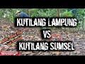 Mikat Kutilang Tanpa Pulut Cengkram Lintas Provinsi Suara Jitu Tajam Ribut  Mp3 - Mp4 Download