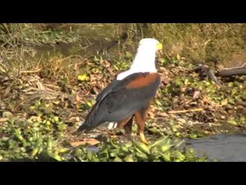 Birds of Kenya: Eagles, Vultures, Flamingos, Kingfishers