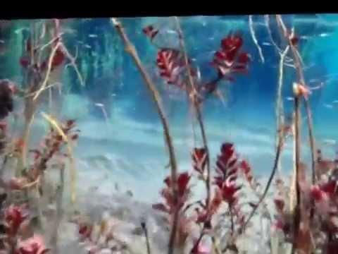 Independence Creek Preserve TNC Artesian Spring