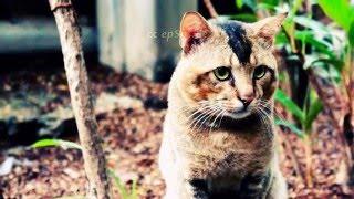 Wild Cat is Hiding in Singapore of Asia