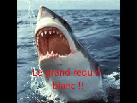Attaque d 39 un requin blanc dans un aquarium a voir - Dessiner un requin blanc ...