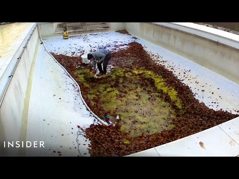 How Pools Are Professionally Deep Cleaned | Deep Cleaned - Insider