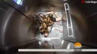 MUTANT GIANT SPIDER DOG PRANK