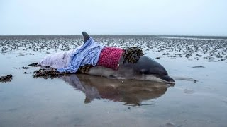 Photographers Save 4-Year-Old Dolphin After GPS Leads Them The Wrong Way
