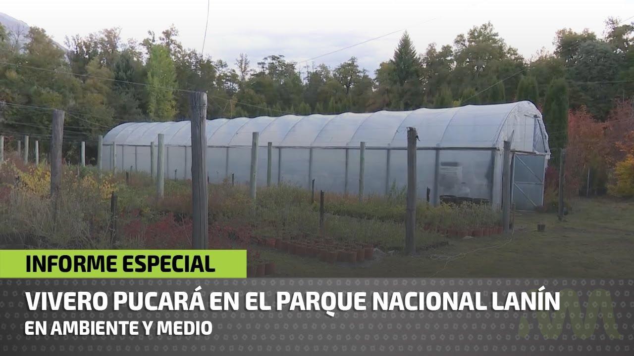 Vivero del parque nacional lan n youtube for Vivero del parque