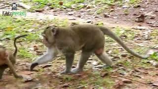 animal mating 動物交配 скрещивание животных ζευγαρώματα ζώων 1