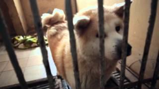 """КП """"Приют для животных"""" (пгт Бородянка) 09.01.2016"""
