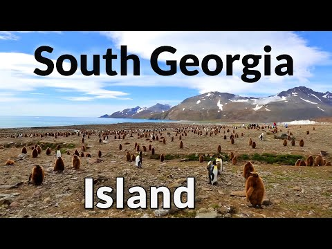 South Georgia Island attractions, seals and penguins