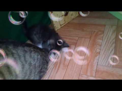 Кошка крысоловка фото -