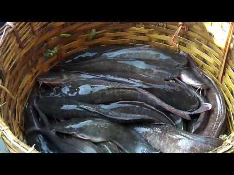 Urly Morning To The Fishari Fish Market In Chittagong , Bangladesh 4 Of 12