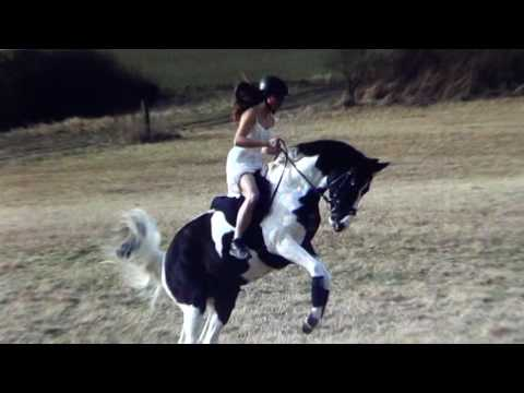 Horse Sports & The Idiots That Love Them - Why Is Abuse OK Just Because You Call It Sport