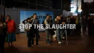 IFAW Stop The Slaughter PSA - Live Darling Harbour Campaign Action