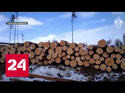 """Ущерб в полмиллиарда: как и куда томские """"черные"""" лесорубы сбывали древесину - Россия 24"""