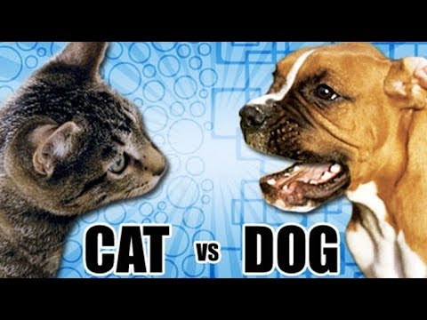 Cats vs Dogs as pets
