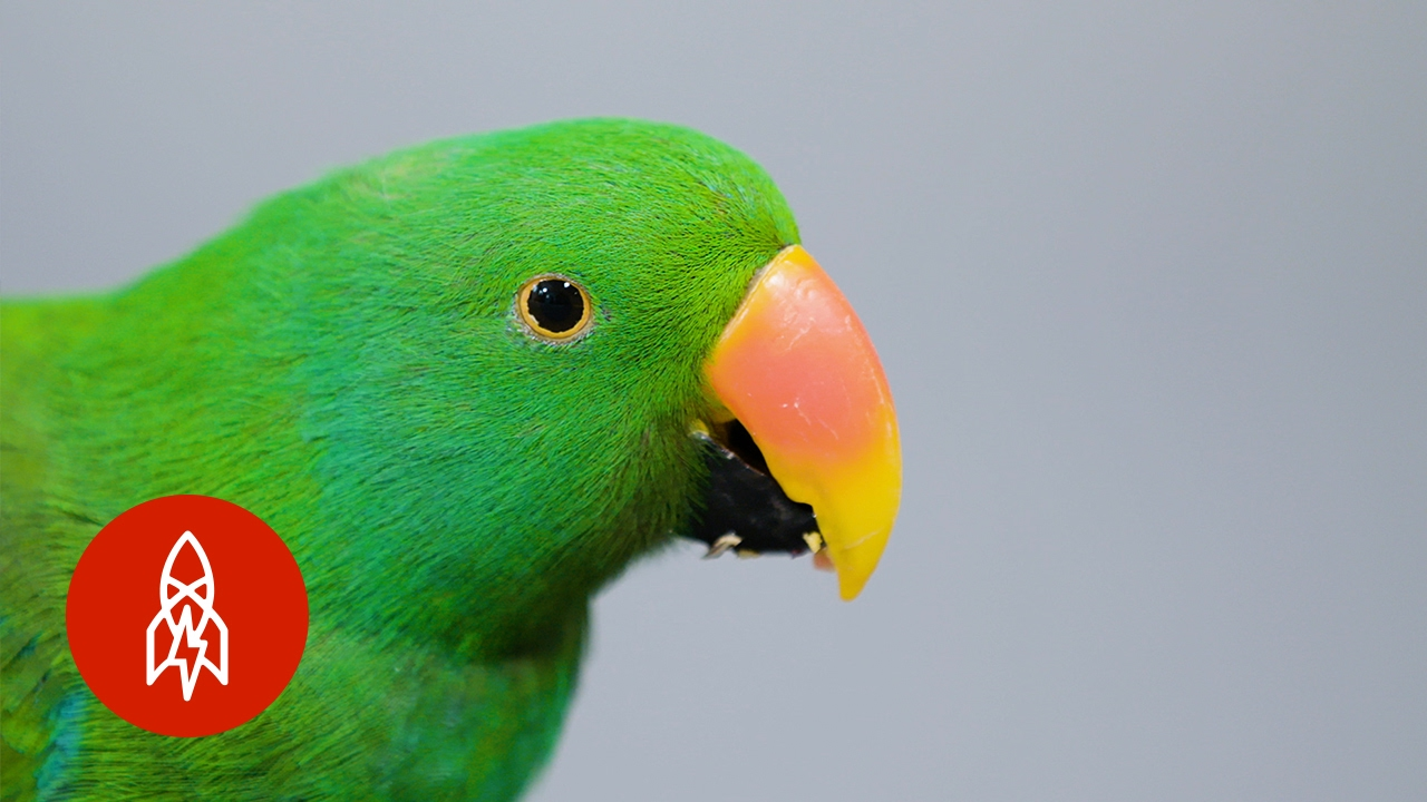 This Beautiful Parrot May Be The Worlds Smartest Bird Youtube