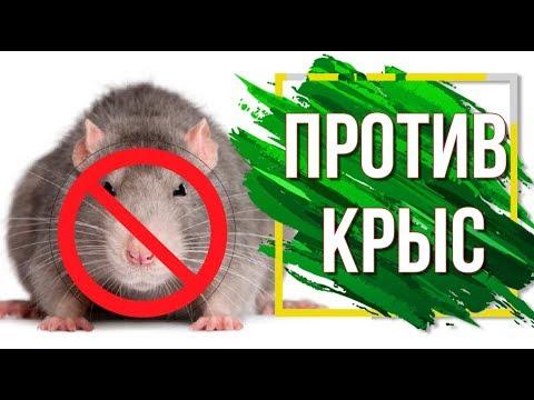 Лучшее средство от Крыс и Мышей ✔️ Грызуны в доме ✔️  Как избавиться от мышей