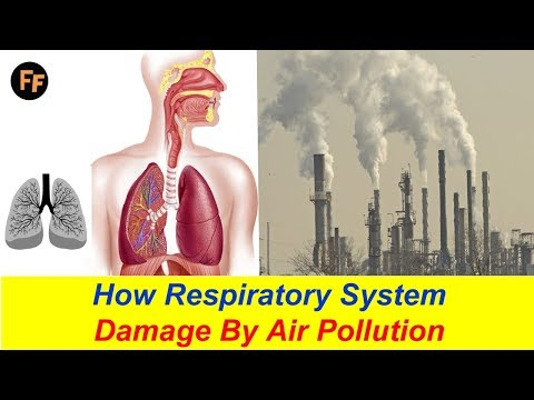 how-respiratory-system-damage?-air-pollution-effects-on-our-health---asthma-causes-by-air-pollution?