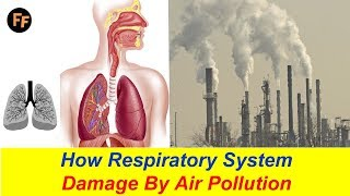 Video How Respiratory System Damage? Air Pollution Effects on Our Health - Asthma Causes by Air Pollution? download MP3, 3GP, MP4, WEBM, AVI, FLV Agustus 2018