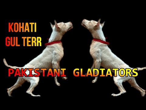 The 5 Best Guard Dogs From Pakistan Youtube
