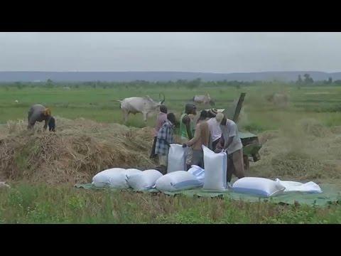 Togo, Les performances du secteur agricole
