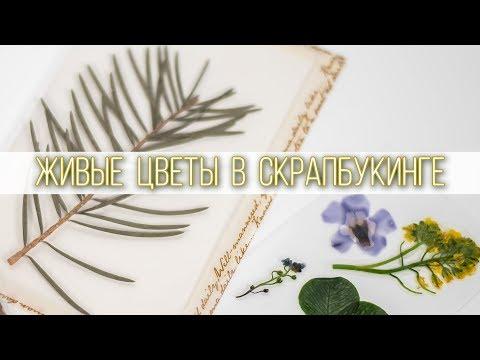 Живые цветы в скрапбукинге   Ламинация растений   Хранение гербария