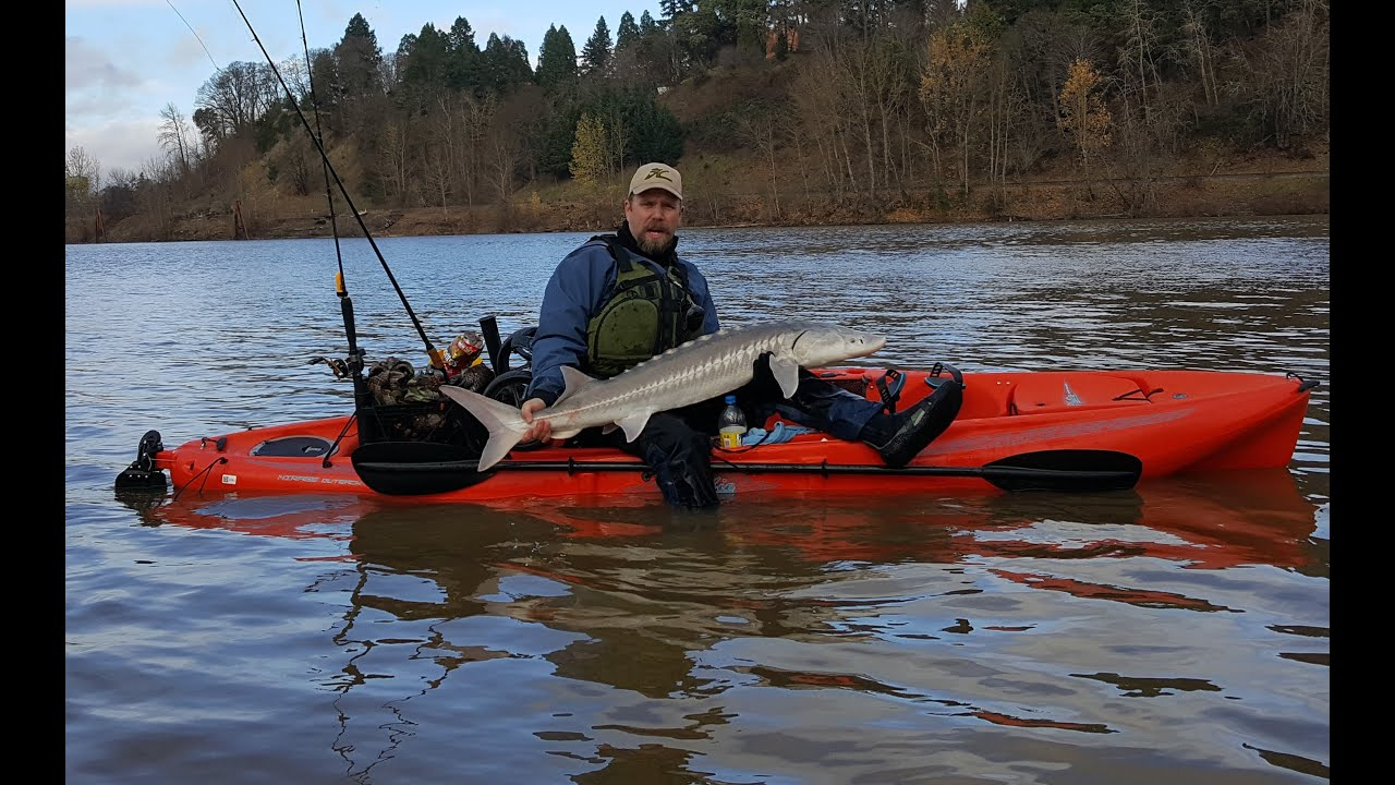 Hobie kayak fishing sturgeon oregon pro cure outback youtube for Oregon out of state fishing license