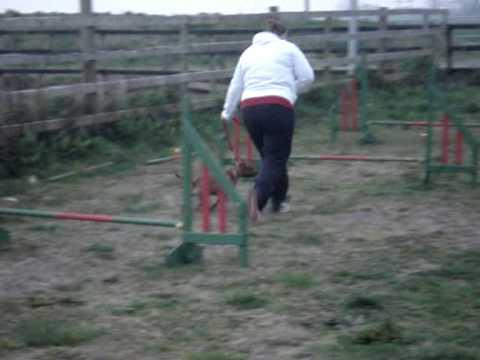 Irish Pit Bull Terrier Training Classes