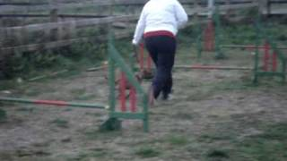 Irish Pit Bull Terrier Training Classes
