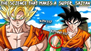 What's the Science Behind Super Saiyan Transformations? – Dragon Ball Super