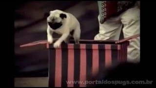 Hutch - Comerciais de TV de 2006 - Compilação de 3 Propagandas com Pug