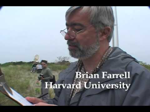Lovells Island Bioblitz with E.O. Wilson and Brian Farrell