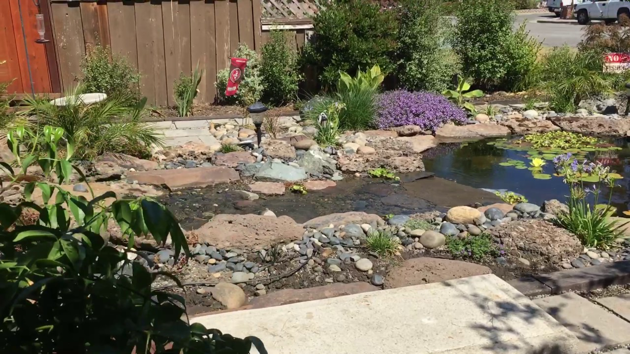 My Front Yard Koi Pond with Stream - YouTube on Front Yard Pond id=73302