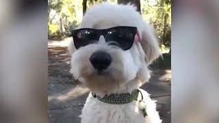 面白い動物の動画をあげています。 チャンネル登録、評価よろしくお願い...