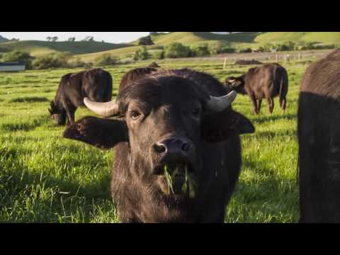 Napa Grass Farmers - Regenerative Beyond Organic Farming