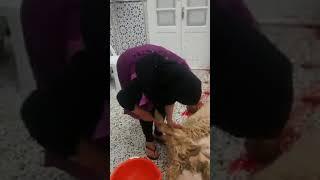 بنت تذبخ حیوان Women Slughter Sheep