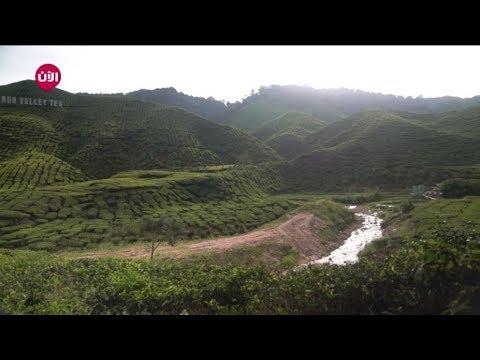 وسط  حقول الشاي في مرتفعات -كاميرون هايلاند- الماليزية #شباب_يلا مشوار  - نشر قبل 3 ساعة